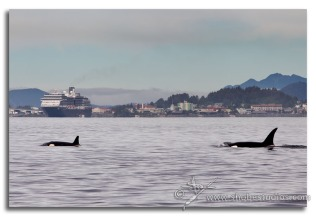 two orcas